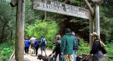 Field testers at Muir Woods pilot testing an audio accessibility app for national parks